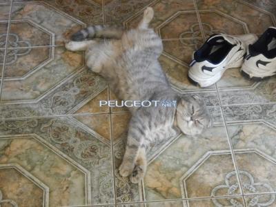 [Peugeot-Club.net] - DSCN1980.JPG