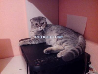 [Peugeot-Club.net] - IMG_20140318_202413.jpg