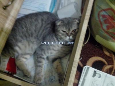 [Peugeot-Club.net] - IMG_20140718_170215.jpg