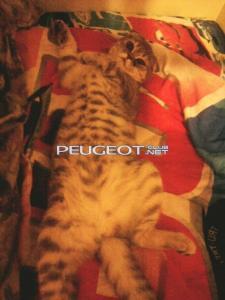 [Peugeot-Club.net] - 0_1_4.jpg