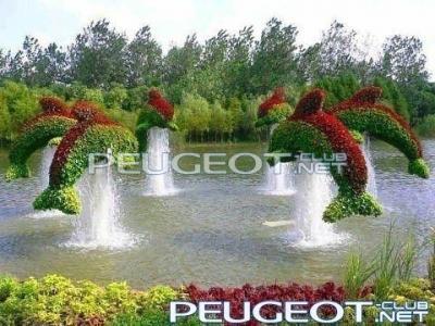 [Peugeot-Club.net] - дельфины.jpg